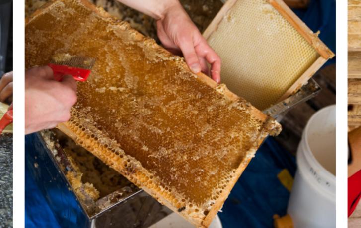 Activite extraction de miel TOHU